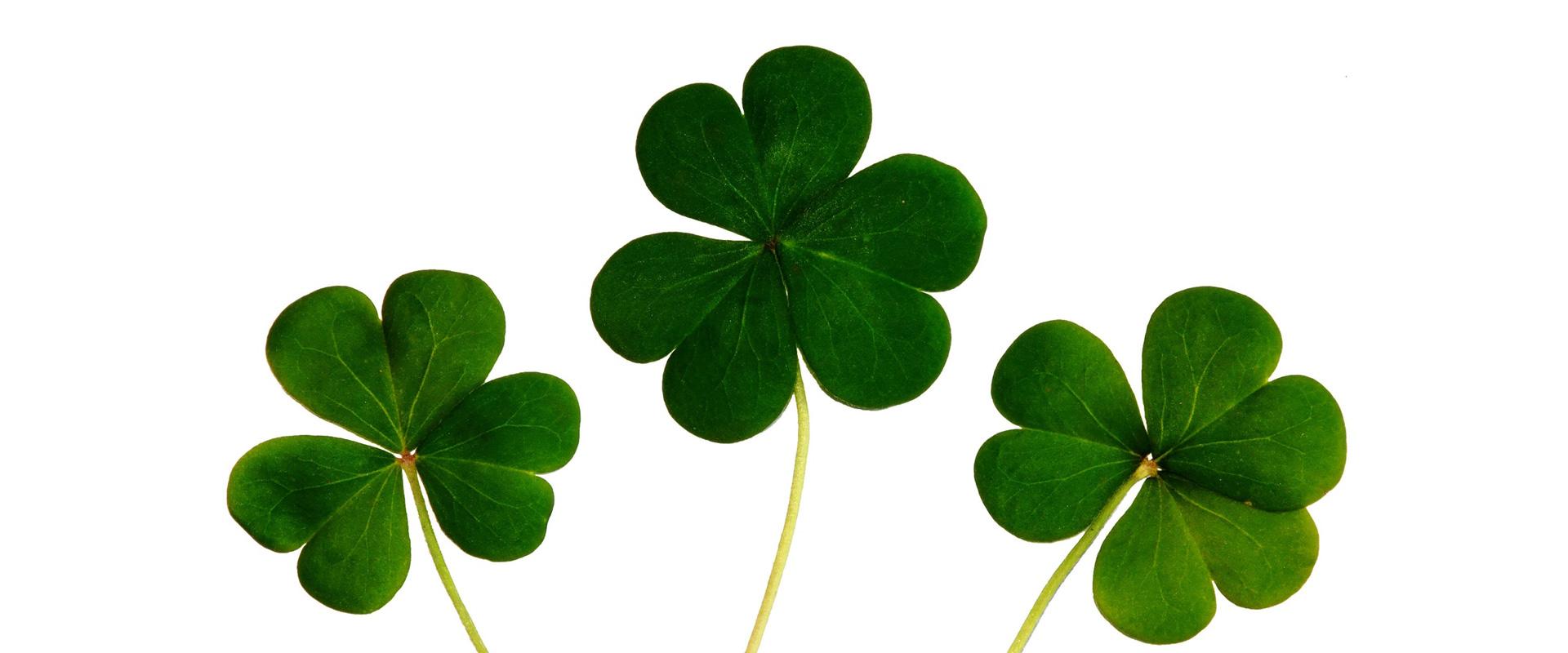 trois trèfles représentant la chance
